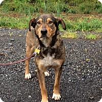 Adopt A Pet :: Ariel - Rockville, MD