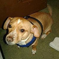 Adopt A Pet :: Aerrow - Tucson, AZ