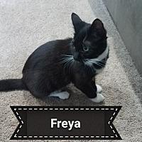 Adopt A Pet :: FREYA - Millerstown, PA