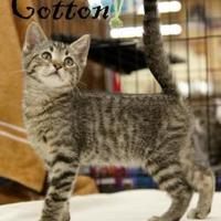 Adopt A Pet :: Grayson - Garland, TX