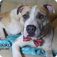 Adopt A Pet :: Meeko - Lonely Heart - Gulfport, MS