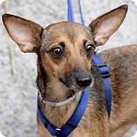 Adopt A Pet :: Trinity - New York, NY