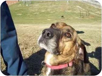 Beagle/Labrador Retriever Mix Dog for adoption in Buffalo, New York - Lavender: Prison Dog