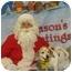 Photo 1 - Beagle Dog for adoption in Somerset, Pennsylvania - Mustang Sally