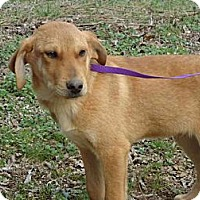 Adopt A Pet :: Dansby Reduced - Staunton, VA