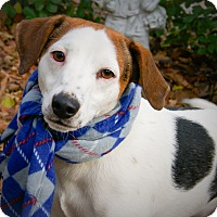 Adopt A Pet :: Sparkle - Princeton, KY
