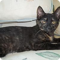 Adopt A Pet :: Tinsel - Acme, PA
