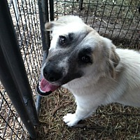 Adopt A Pet :: Charlotte - Fair Oaks Ranch, TX