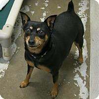 Adopt A Pet :: Jolie - Geneseo, IL