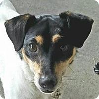 Adopt A Pet :: JOEY - Terra Ceia, FL