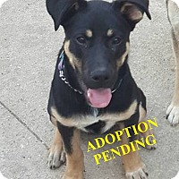 Adopt A Pet :: OSKAR - Winnipeg, MB