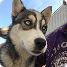 Adopt A Pet :: Latecia