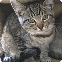 Adopt A Pet :: Betty - Chula Vista, CA