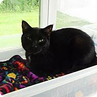 Adopt A Pet :: Spivey - Belleville, MI