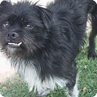 Adopt A Pet :: Bubba - Henderson, NV