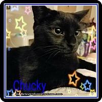 Adopt A Pet :: Chucky Finster - Blaine, MN