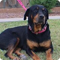 Adopt A Pet :: Emily - Gilbert, AZ