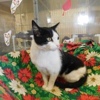 Adopt A Pet :: Ross - Louisville, OH