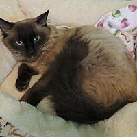 Adopt A Pet :: Lovecake - Lakewood, CO