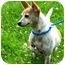 Photo 2 - Chihuahua Mix Dog for adoption in Sacramento, California - Tipsy