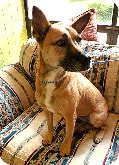 German Shepherd Dog Mix Dog for adoption in Groton, Massachusetts - Maggie