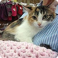 Adopt A Pet :: Sophie - Vero Beach, FL