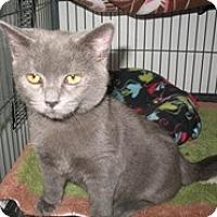 Adopt A Pet :: Ula - Shelton, WA