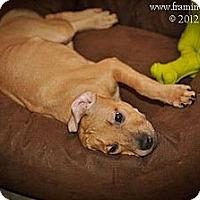 Adopt A Pet :: Lil' Bit - Reisterstown, MD