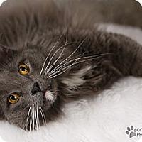 Adopt A Pet :: Braveheart - Eagan, MN