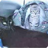 Adopt A Pet :: Buttons - Lunenburg, MA