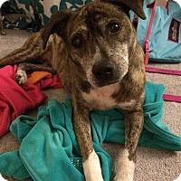 Adopt A Pet :: Nala - Madison, NJ
