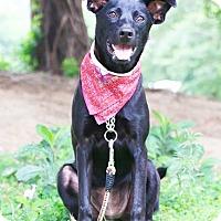 Adopt A Pet :: Phoebe - San Mateo, CA