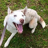Adopt A Pet :: ZINI/ZEKE - Powder Springs, GA