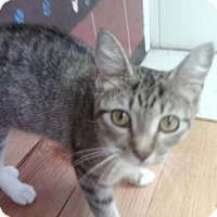 Adopt A Pet :: Rosie - New Bern, NC
