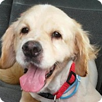 Adopt A Pet :: Skye - Studio City, CA