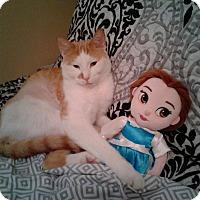 Adopt A Pet :: Bruce (Petsmart) - Staten Island, NY