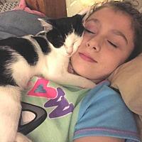Adopt A Pet :: Biloxi - Knoxville, TN