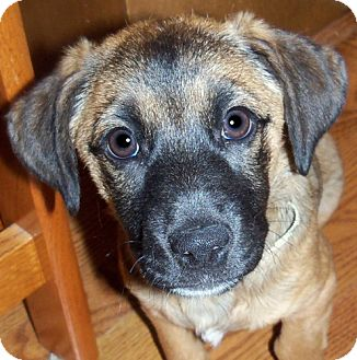 Terrier (Unknown Type, Medium) Mix Puppy for adoption in Cary, North Carolina - Holly--ADOPTED