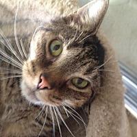 Adopt A Pet :: Cason - Clearwater, FL