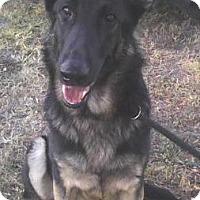 Adopt A Pet :: Chance - Inverness, FL