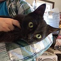Adopt A Pet :: Ghost - Jefferson, NC