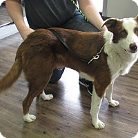 Adopt A Pet :: FLARE - San Pedro, CA