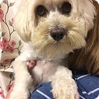 Adopt A Pet :: Woody Winslow - Kansas city, MO