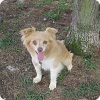 Adopt A Pet :: Timothy - Rocky Mount, NC