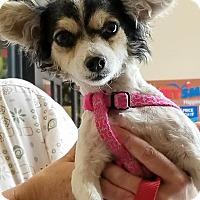 Adopt A Pet :: Gigi - Osteen, FL