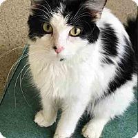 Adopt A Pet :: Skye - Gahanna, OH
