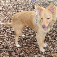 Adopt A Pet :: Lucky - Umatilla, FL