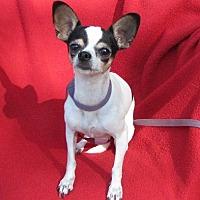 Adopt A Pet :: Chica - Oakland, AR