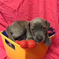 Adopt A Pet :: #7 - Groveland, FL