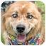 Photo 1 - Australian Shepherd Mix Dog for adoption in Cincinnati, Ohio - Skip